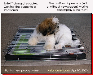 Toa Payoh Vets Singapore toilet training case studies. Pee pan with Wire Flooring.