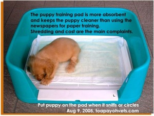 Puppy training pads are cleaner for the puppy. Toa Payoh Vets.