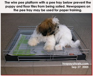 An alternative to papers on flooring + 4 fences in house-training the new puppy. Toa Payoh Vets