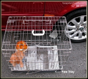 Wire crate + door + pee tray, Toa Payoh Vets