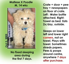 Housbreaking MalteseXPoodle during 7 days after purchase can be difficult. Observe his routine.