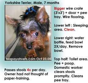 Yorkshire Terrier. Bigger spacious crate. No need paper-training. Clears stools promptly.