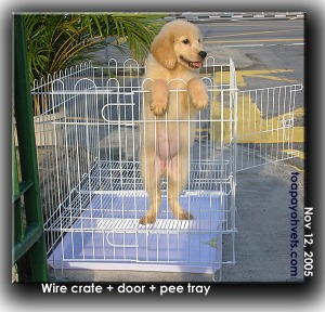 Bigger breeds like the Golden Retriever may not be confined in this wire crate. Toa Payoh Vets