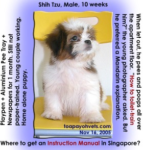 No time or know-how to paper-train the Shih Tzu. Toa Payoh Vets.