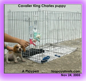 A dual-nozzled water bottle for the puppy outside the playpen. Toa Payoh Vets