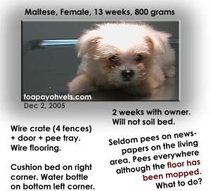 Restrict freedom of Mini-Maltese till paper-trained. Toa Payoh Vets