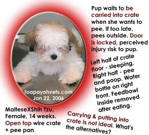 MalteseXShihTzu carried to pee. Toa Payoh Vets