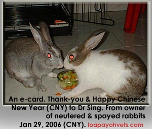 Rabbits - male, female sterilised by Dr Sing. An unexpected e-card from the lady owner.  Toa Payoh Vets