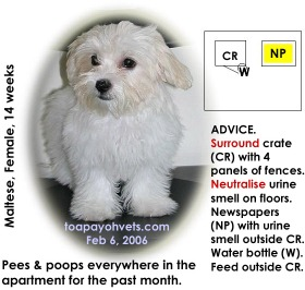 14-week-old Maltese thinks the whole apartment is her toilet, not her den. Toa Payoh Vets