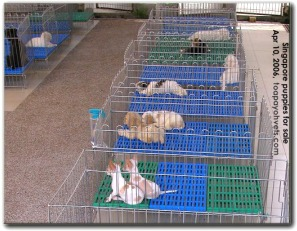 An excellent set up of infrastructure for selling puppies in Singapore. Toa Payoh Vets