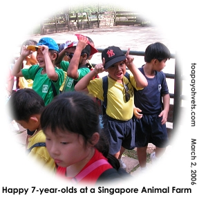 Singapore's Primary One students at an Animal Farm. Sunny evening. Happiest children.  Toa Payoh Vets.