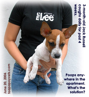 3-month-old Jack Russell coughs daily but normal appetite. Poops anywhere. Toa Payoh Vets