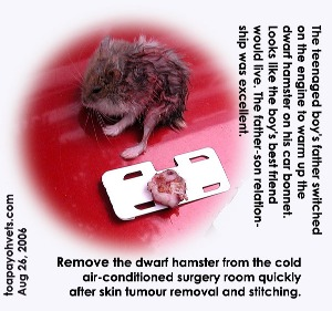 Large skin tumour removed, but the hamster stopped breathing. Toa Payoh Vets