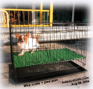 Wire crate and pee pan for Singapore puppies. Toa Payoh Vets.