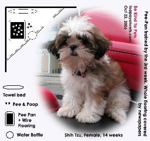Pee-Pan+Wire Flooring Trained by 3rd week. Shih Tzu, apartment backyard. Toa Payoh Vets