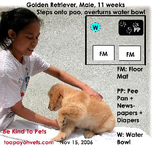 Stepping onto poo, overturns water bowl. Golden Retriever 11 weeks. Pee Pan trained. Toa Payoh Vets