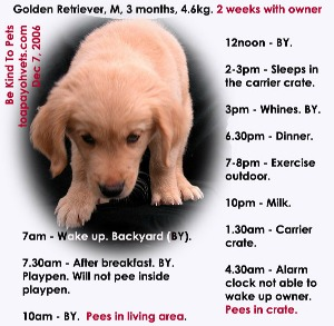 3-hourly schedule for 3-month-old Golden Retriever may be too long. Toa Payoh Vets