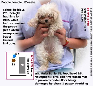 Paper-trained in 5 days by pre-teen girl. Toa Payoh Vets