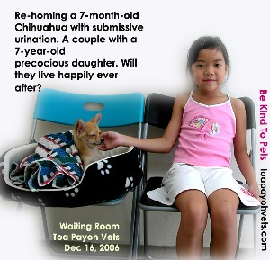 Toilet-training & other routine are needed if rehoming is to succeed. Toa Payoh Vets