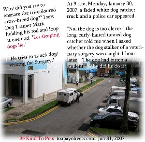 A dog stalker of a veterinary surgery. Toa Payoh Vets.