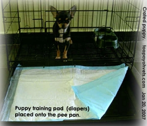 The crate, put in the kitchen, is the Chihuahua's toilet. Toa Payoh Vets