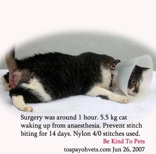 cat damage Anal sac