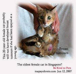 Breast tumours in 20-year-old intact female cat, Singapore. Toa Payoh Vets