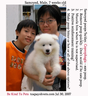 Samoyed, 2 weeks with owner. Poops 5x/day. Eats poop. Toa Payoh Vets