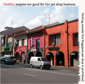 Many Singapore puppy buyers want to know that pet shop puppies are in good health. Toa Payoh Vets