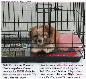 Crate as toilet training for first-time puppies. Toa Payoh Vets