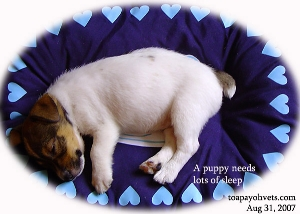 A 8-12-week-old puppy needs many hours of sleep. Toa Payoh Vets