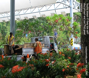 Regular maintenance of the mind or garden is the secret of success. Toa Payoh Vets