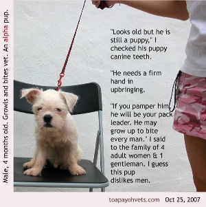 Biting behaviour of male alpha pups need to be suppressed early. Toa Payoh Vets