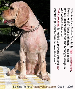 Skin disease due to lack of grooming. Clipped bald. Treat. Groom daily. Toa Payoh Vets