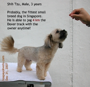 Slowly condition your dog to jog in Singapore. Toa Payoh Vets