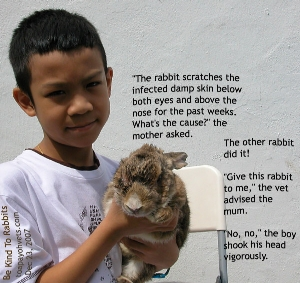 Singapore rabbit. Damp, infected skin below eyes, bridge of nose. Toa Payoh Vets