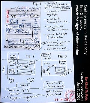 Miniature Schnauzer paper training proposal. Toa Payoh Vets