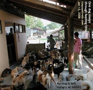 Ad lib feeding. No dog fights over food. One still napping at feeding time. NANAS.  Toa Ppayoh Vets