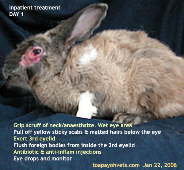 031208asingapore Toa Payoh Veterinary Dog Cat Rabbits