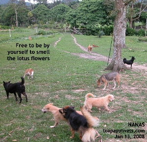 Noah's Ark Natural Animal Sanctuary - NANAS visit. Toa Payoh Vets.
