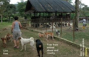 NANAS - living free. Toa Payoh Vets