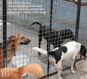 "NANAS - refuge for ""aggressive"" dogs protecting their master's work place.  Toa Payoh Vets"