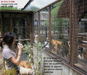 NANAS - no-kill animal shelter for homeless cats. Toa Payoh Vets.