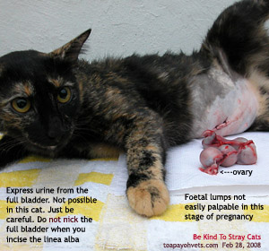 Many Singapore stray cats are sent to the vet for sterilisation by volunteers. Toa Payoh Vets