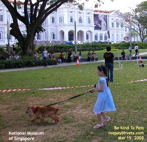 National Museum of Singapore Girl (profile). A young Singapore girl. Toa Payoh Vets.