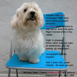 Paper-trained. 3 years old new. Maltese. Singapore. Toa Payoh Vets
