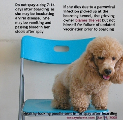 Do not spay/neuter a dog 7-14 days after boarding. Toa Payoh Vets