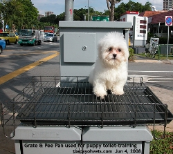 Singapore puppy toilet training. Grate+ Pee Pan. Toa Payoh Vets