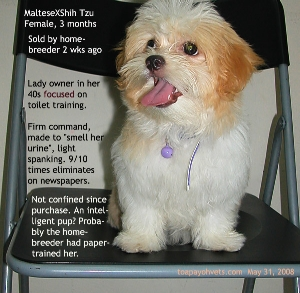 MalteseXShih Tzu appeared intelligent? Paper-trained. Does not mess apartment when owner is out. Toa Payoh Vets