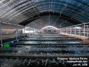 Oceanus' Abalone Farm, Xiamen, China. Toa Payoh Vets
